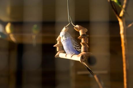 vogels.jpg