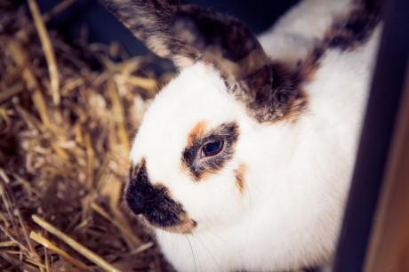 konijn.jpg